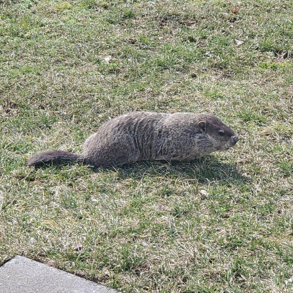 Groundhog's Day for kids program